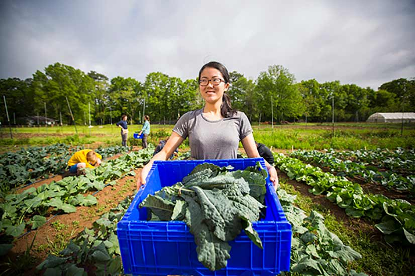 Celine Kong pulls her weight helping gather vegetables at the farm.