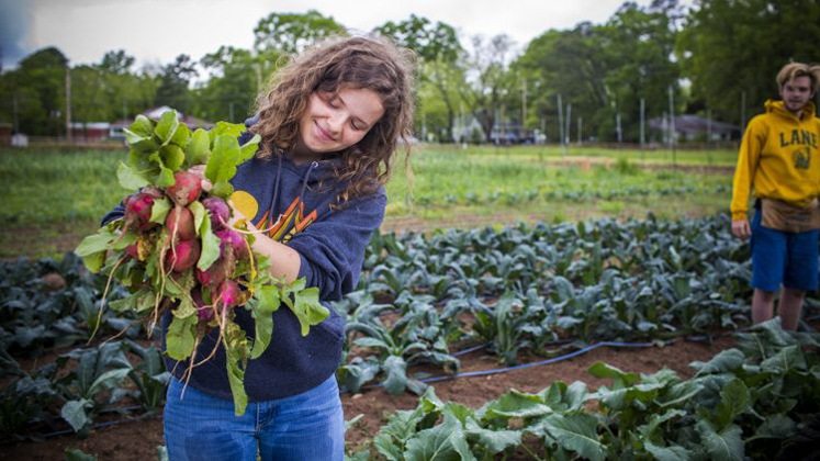 Gratia Sullivan unearths a bunch of radishes at the Oxford Organic Farm.