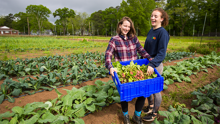 Oxford students harvest crops.